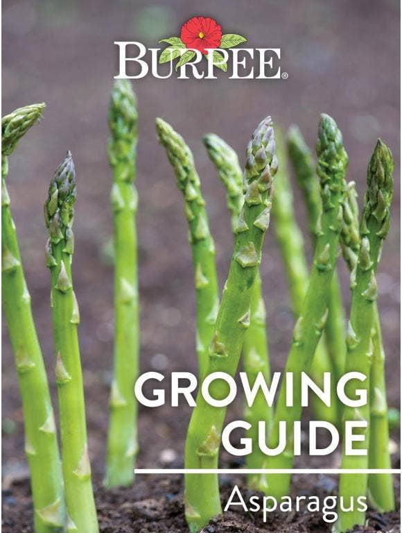 Learn About Asparagus