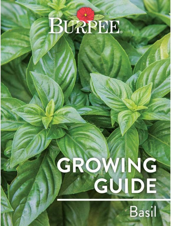 Learn About Basil