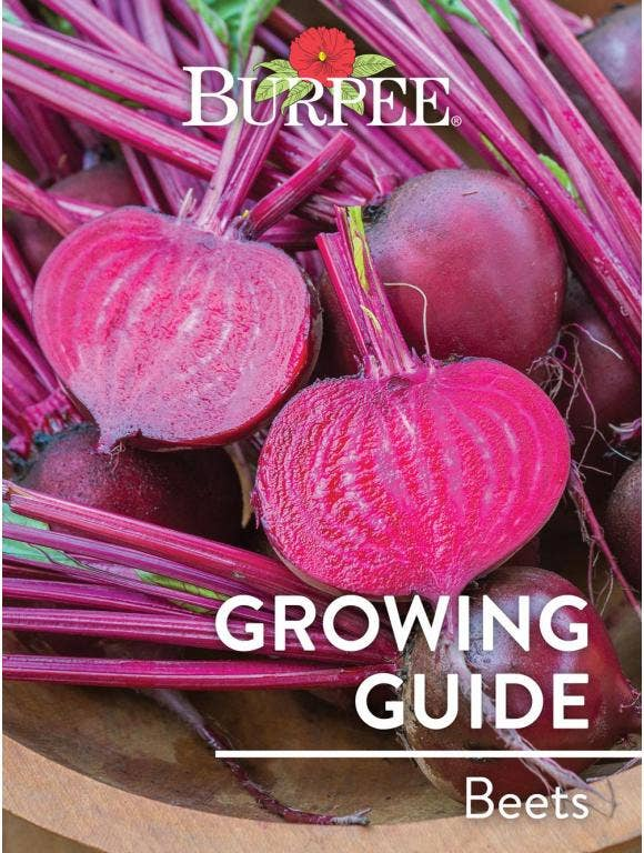 Learn About Beets