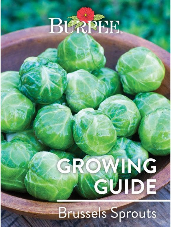 Learn About Brussels Sprouts