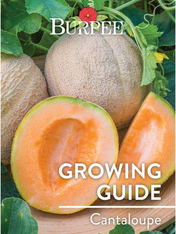 Learn About Cantaloupe