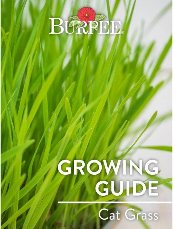 Learn About Cat Grass