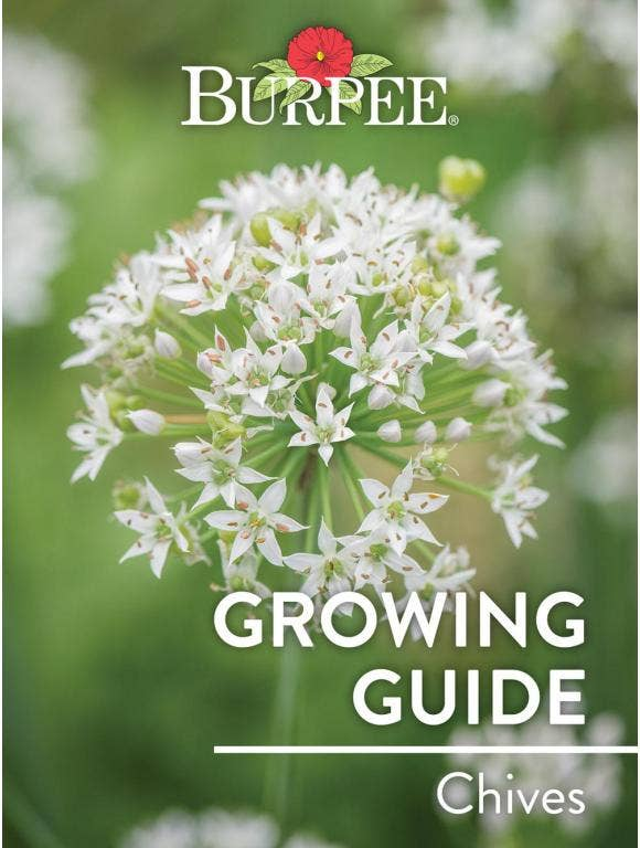 Learn About Chives