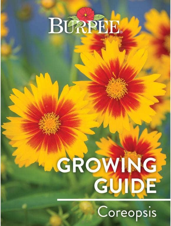 Learn About Coreopsis