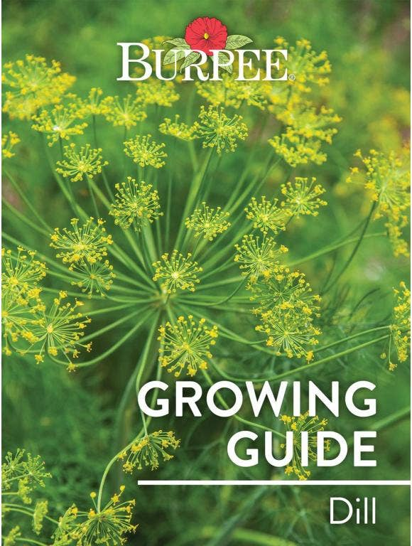 Learn About Dill