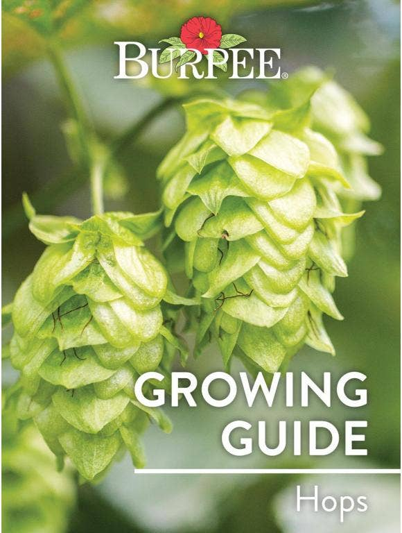 Learn About Hops