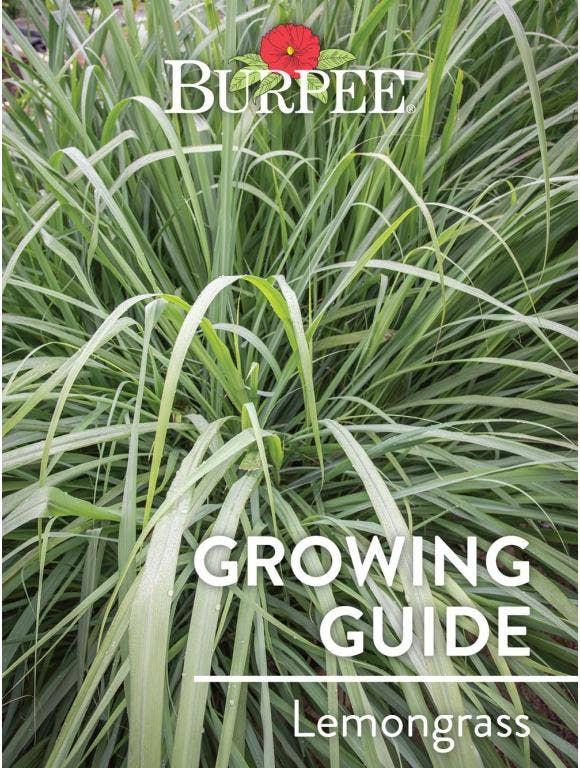 Learn About Lemongrass