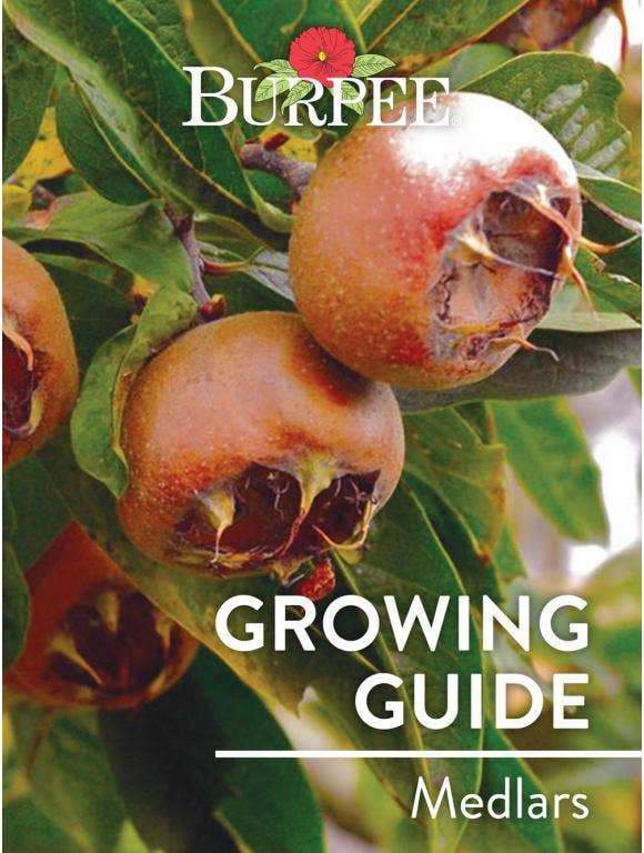 Learn About Medlars