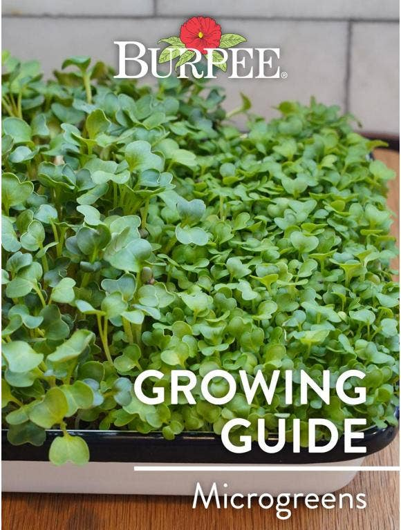 Learn About Microgreens