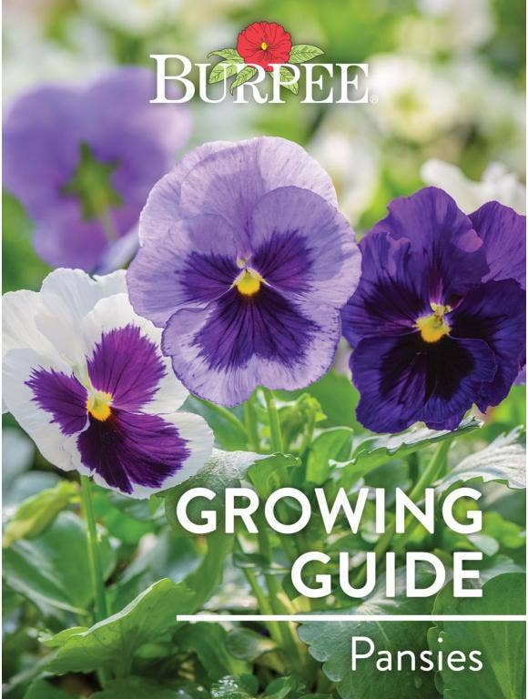 Learn About Pansies