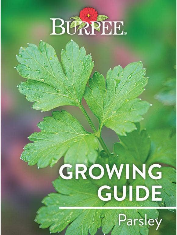 Learn About Parsley