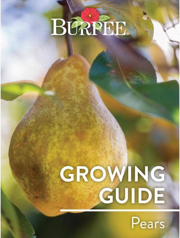 Learn About Pears