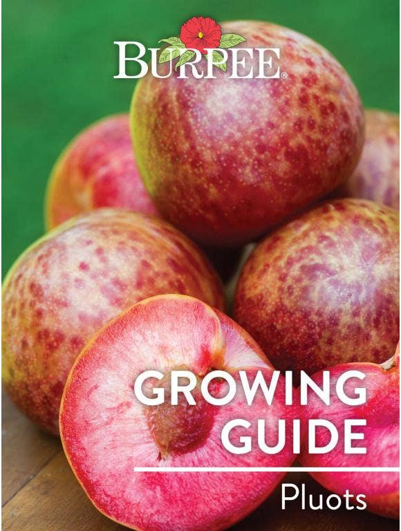 Learn About Pluots