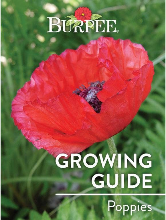 Learn About Poppies