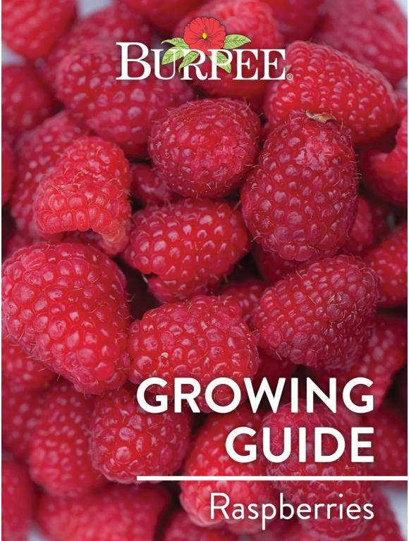 Learn About Raspberries