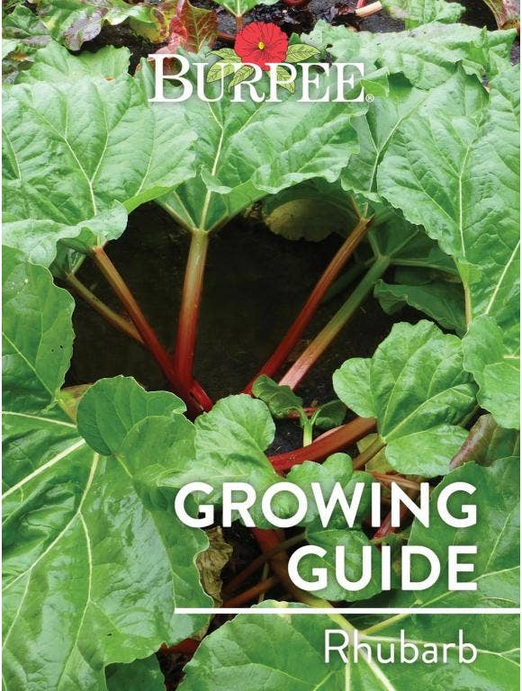 Learn About Rhubarb