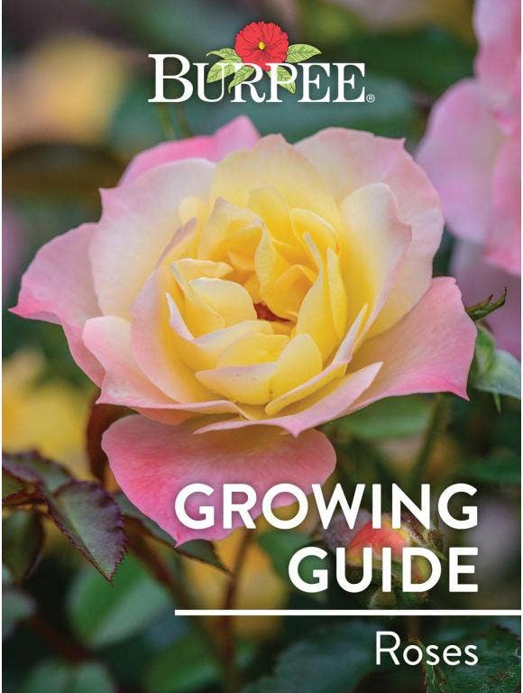 Learn About Roses