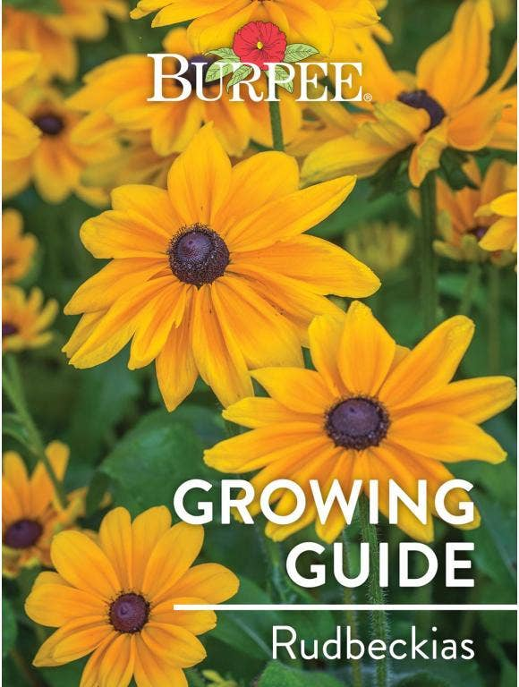 Learn About Rudbeckias