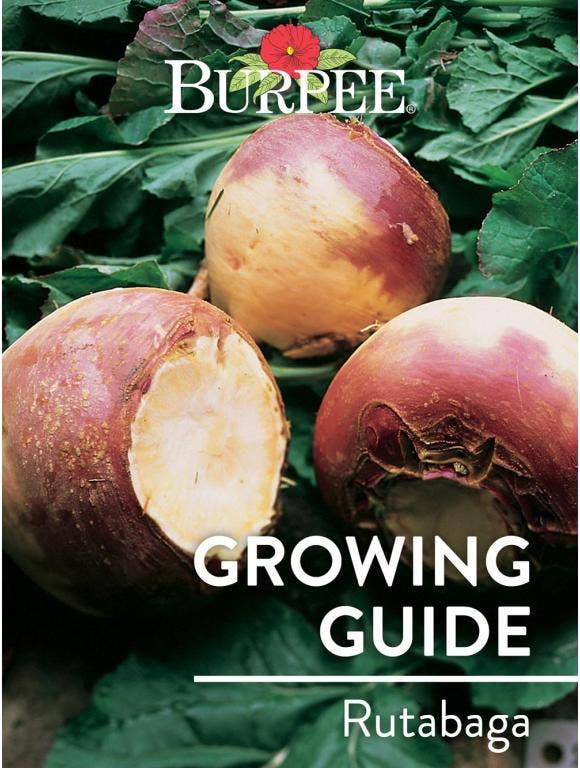 Learn About Rutabaga
