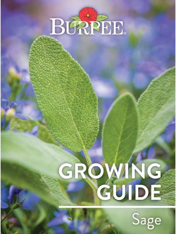 Learn About Sage