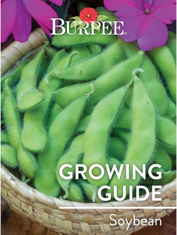 Learn About Soybean