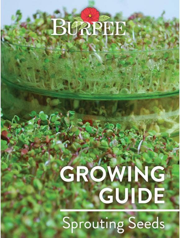 Learn About Sprouting Seeds