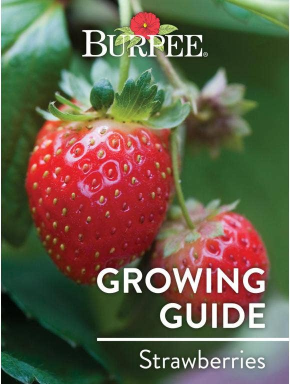Learn About Strawberries