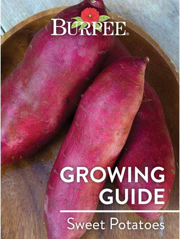 Learn About Sweet Potatoes