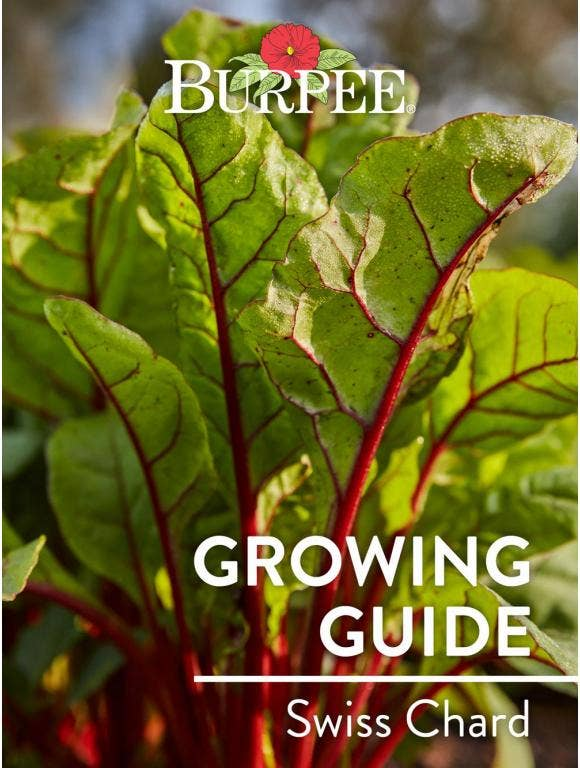 Learn About Swiss Chard