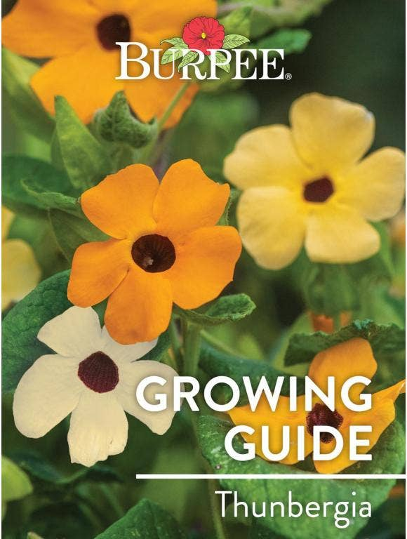 Learn About Thunbergia