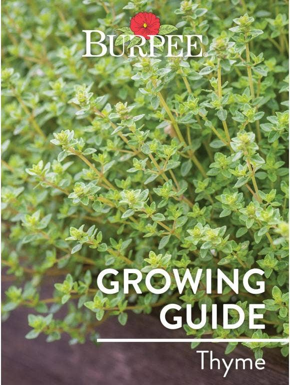Learn About Thyme