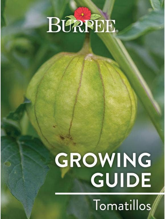 Learn About Tomatillos