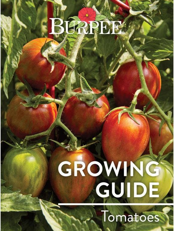 Learn About Tomatoes