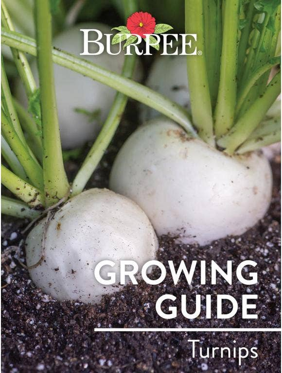 Learn About Turnips