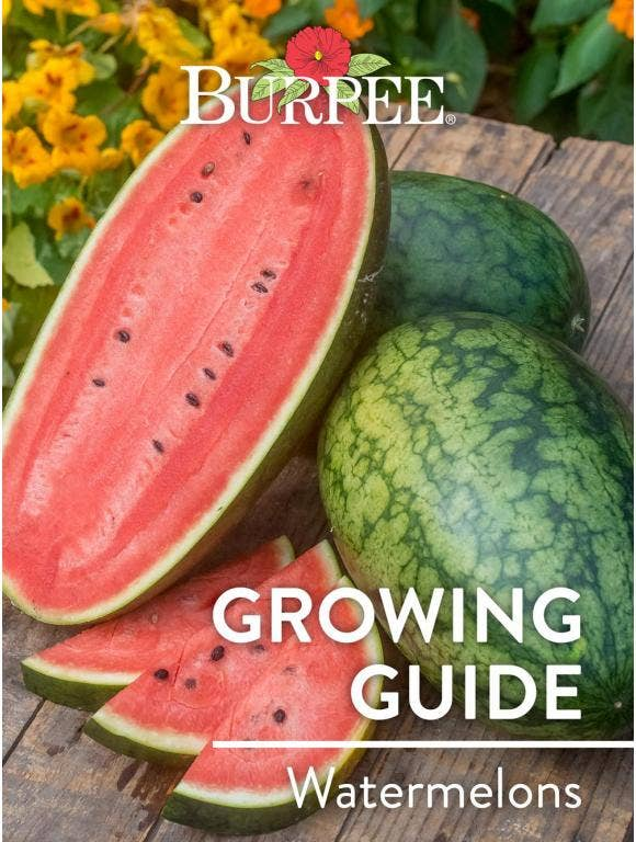 Learn About Watermelons