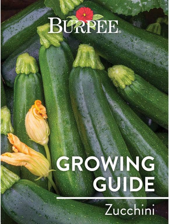 Learn About Zucchini