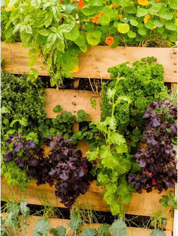 An outdoor vertical garden featuring a wood pallet and plants.