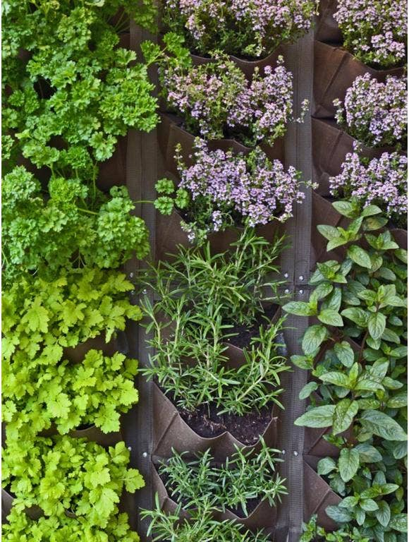 A variety of herbs grown vertically in a pocket planter.