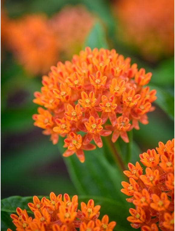 How To Grow Perennial Flowers From Seed