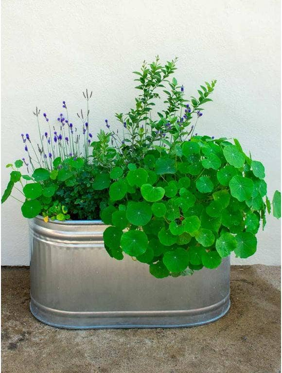 5 Unique Container Gardening Ideas to Fit a Smaller Space