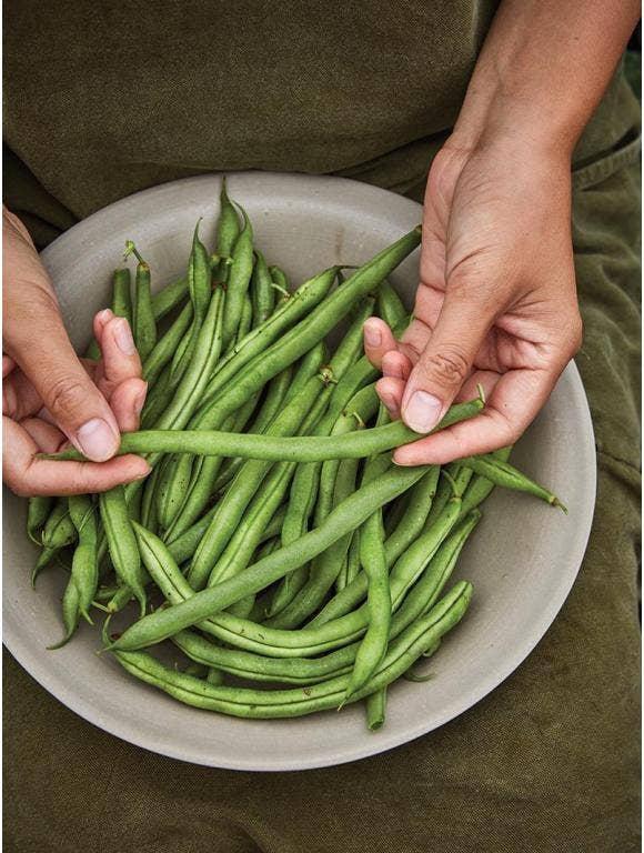 Growing Beans - Pole or Bush