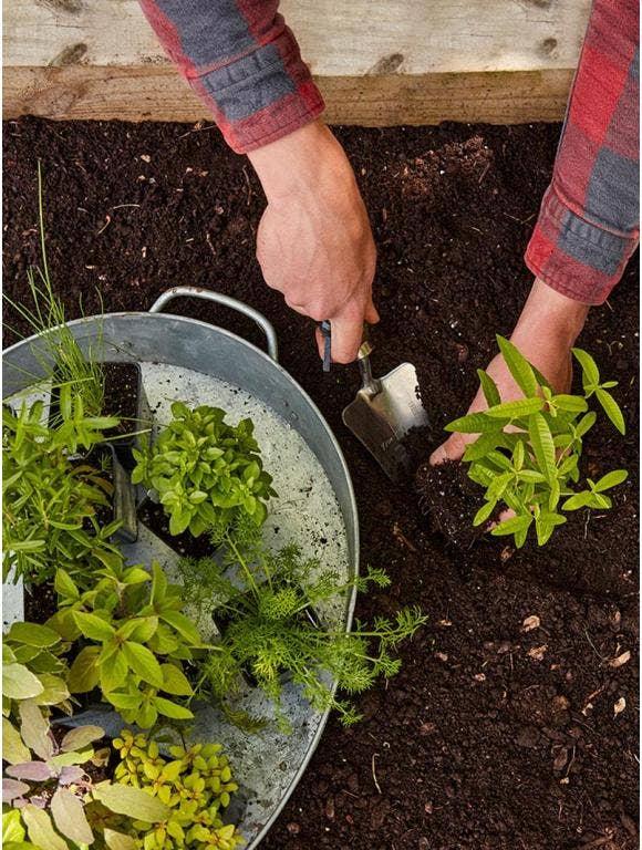 Get Your Garden Started: 5 Gardening Tips for Beginners