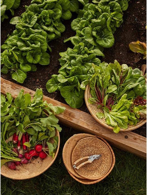 10 Best Vegetables for Beginner Gardeners to Grow