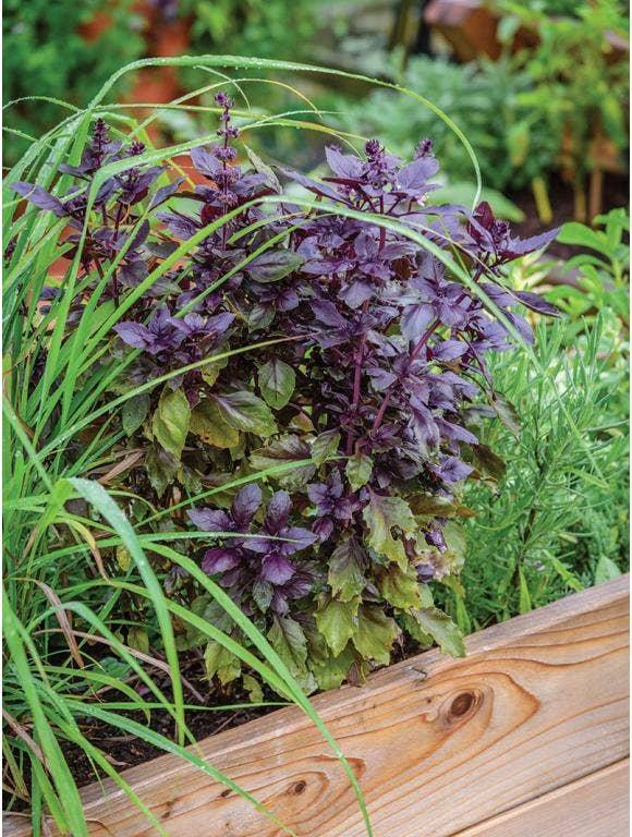 Short Season Herb Gardening