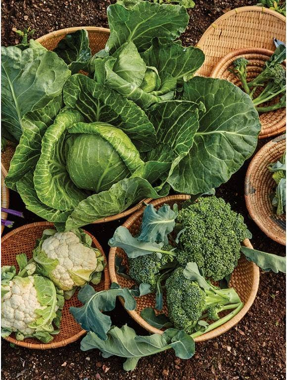 Start Your Garden with Cool Season Vegetables