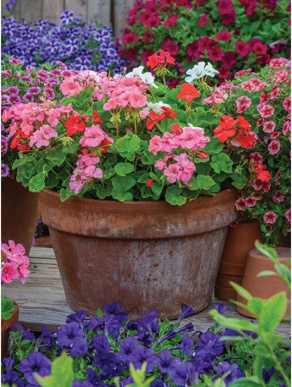 Create Flower Containers with Major Curb Appeal