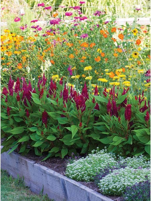 Designing Beds – Using layers in the garden
