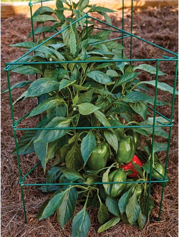 How to Use a Pepper & Eggplant Cage