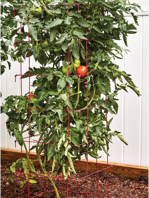 How to Use a Tomato Cage