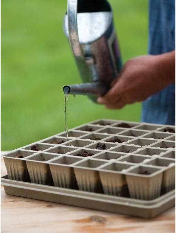 Why Did My Seeds Not Sprout? Learn the Reasons for Seeds Not Germinating